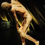 Our Body_14