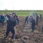 plantare copaci voluntari (1)