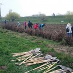 plantare copaci voluntari (10)