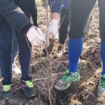 plantare copaci voluntari (12)