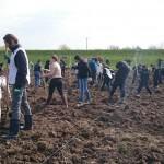 plantare copaci voluntari (13)