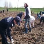 plantare copaci voluntari (2)