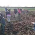 plantare copaci voluntari (3)