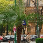 palmierii din timisoara.Still003