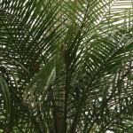 palmierii din timisoara.Still010