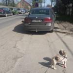 parcare nesimtitii traficului (6)