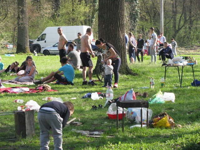 picnic-padurea-verde_10