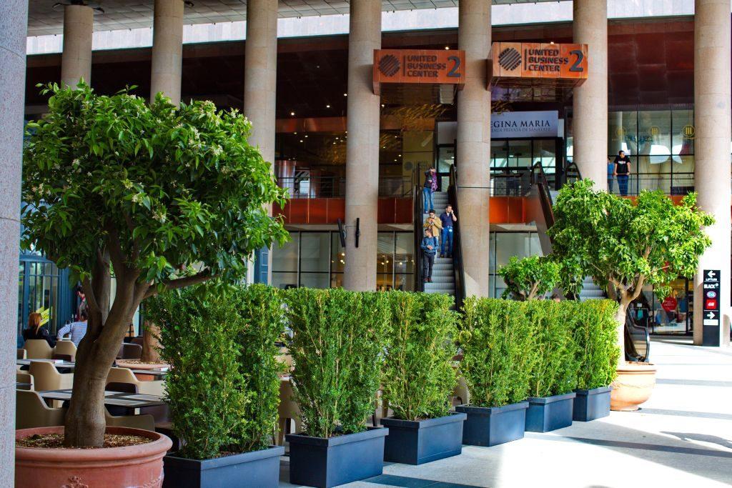 Amenajari peisagistice Iulius Mall 2