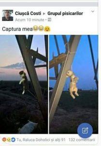 pisica spanzurata