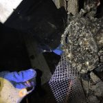 caine incendiu casa giroc (5)